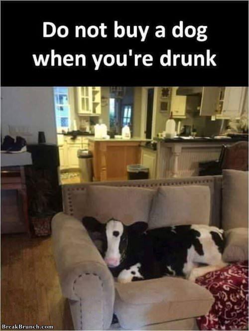 dot-buy-dog-when-drunk-100119