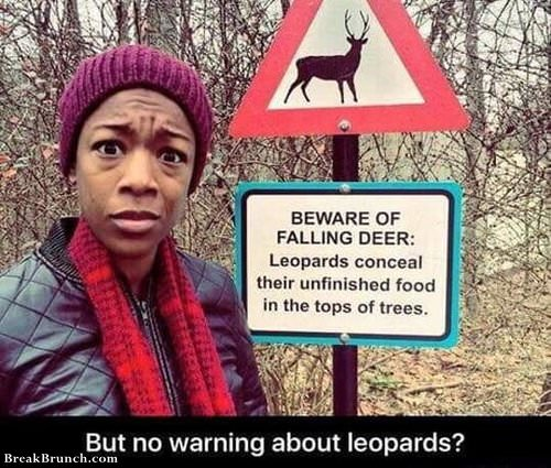 but-no-warning-of-leopards-1102190336